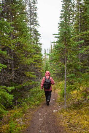 yukon territory: Hiker with backpack hiking on Sam McGee Trail, Yukon Territory, Canada, through autumn fall boreal forest Taiga on a rainy day Stock Photo