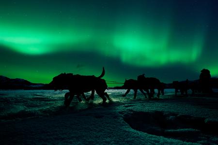 북부 불빛 아래 musher와 썰매를 당기는 썰매 개 팀의 실루엣.