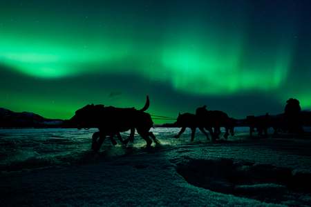 Silhouette of sled dog team pulling sleigh with musher under the northern lights.