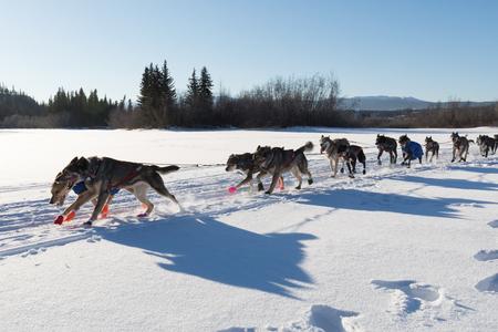 mushing: Dog team racing in Yukon Quest 1,000 Mile International Sled Dog Race in beautiful Yukon Territory, Canada, winter snow landscape Stock Photo