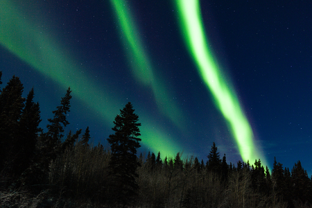 Spectacular Northern Lights or Aurora borealis or polar lights dancing over boreal forest taiga landscape of Yukon Territory, Canada Stock Photo
