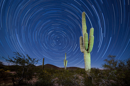 Iconic Sonoran Desert Saguaro columnar cactus, Carnegiea gigantea, under starry Arizona night sky with circular startrails