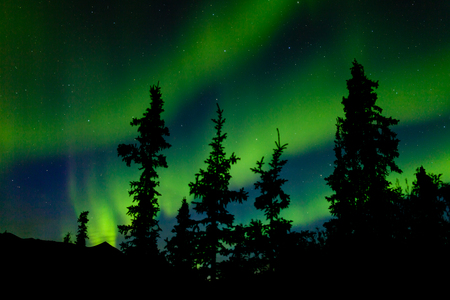 yukon territory: Intense bands of Northern lights or Aurora borealis or Polar lights dancing on night sky over enchanted boreal forest spruce trees of Yukon Territory, Canada Stock Photo