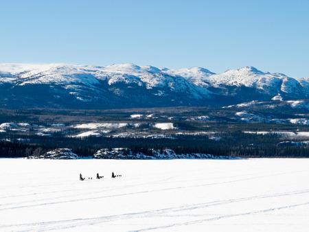mushing: Sled dog teams mushing on frozen Lake Laberge outdoors snowy winter landscape, Yukon Territory, Canada