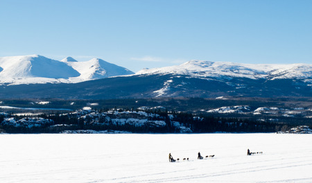yukon territory: Sled dog teams mushing on frozen Lake Laberge outdoors snowy winter landscape, Yukon Territory, Canada