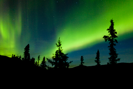 Intense bands of Northern lights or Aurora borealis or Polar lights dancing on night sky over enchanted boreal forest spruce trees of Yukon Territory, Canada Stock Photo