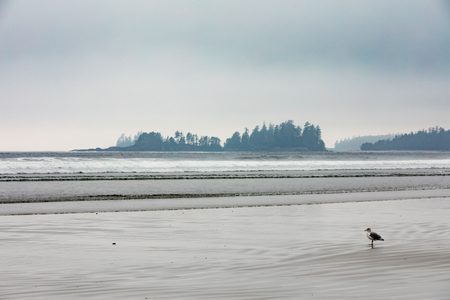 Foggy weather on Long Beach of Pacific Rim National Park Reserve near Tofino, Pacific Ocean West Coast of Vancouver Island, British Columbia, BC, Canada