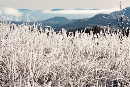 Thick layer of hoar-frost covers grass vegetation with blurred hilly landscape background of Yukon Territory, YT, Canada