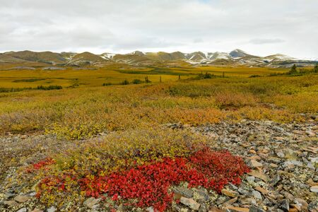 Fall colors of arctic tundra of Eagle Plains and Richardson Mountains at arctic circle, Yukon Territory, YT, Canada