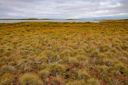 Arctic tundra landscape at coast of Beaufort Sea Arctic Ocean near town of Tuktoyaktuk, Northwest Territories, NWT, Canada Stok Fotoğraf