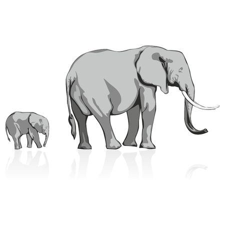 fully editable: fully editable   illustration of wild elephants