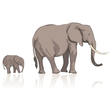 tusks: fully editable   illustration elephants