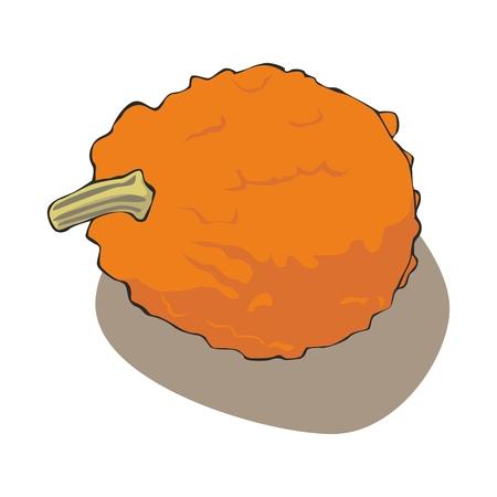 fully editable illustration pumpkin Vector