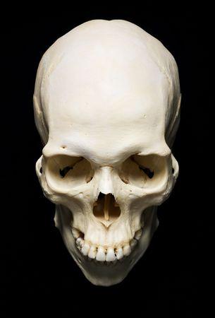 calavera: Skull real blanco con fondo negro  Foto de archivo