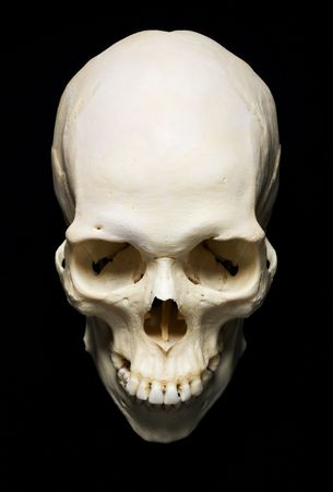 skeleton skull: white real Skull with black background