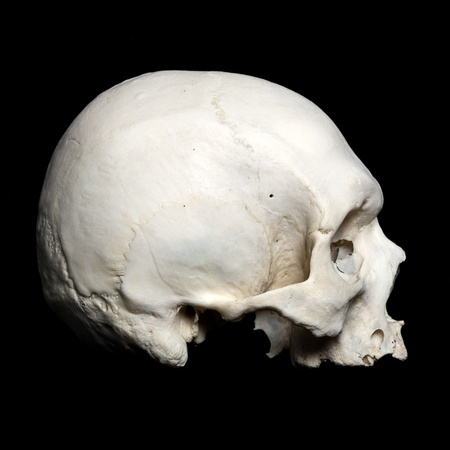 real human Skull. Upper half. with black background photo