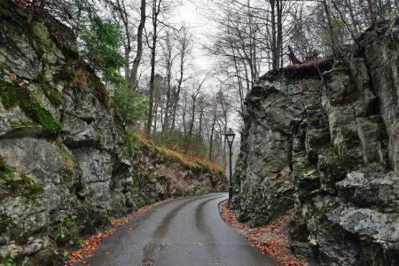 neuschwanstein: Stone road in the forest near Hohenschwangau castle in Germany. Raining autumn day