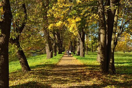 catherine: Autumn sunny landscape with trees and road   in Catherine garden, Pushkin, Russia