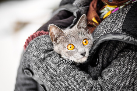 girl with gray eyes: girl in a coat holding a gray cat with yellow eyes fire rescue