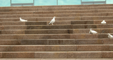 white doves on the stairs