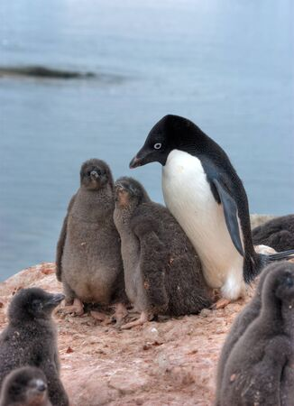 Lots of penguins standing on rocks photo