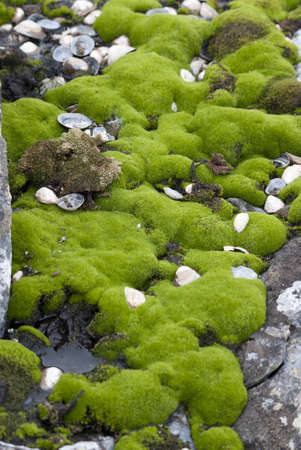 mosses: Springtime Antarctic mosses.