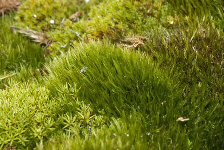 antarctic peninsula: Moss on a summer day on the islands of the Antarctic Peninsula. Stock Photo