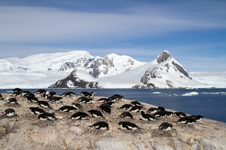 penguin colony: Adelie penguin colony on the rocks on the background of mountains Stock Photo