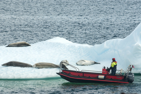 ice floes: red powerboat near ice floes with crabeater seal