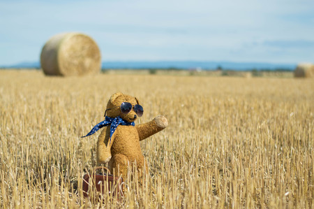 Teddy bear stand in the harvested wheat field with sunglasses in the summer