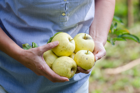 Middle age woman holds apples in the garden Standard-Bild