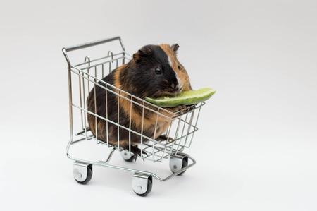 Meerschweinchen sitzt in einem Einkaufswagen auf isoliertem Hintergrund Standard-Bild