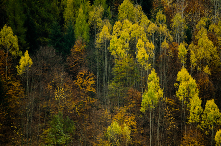 Autumn forest textures - in the Slovakian mountains