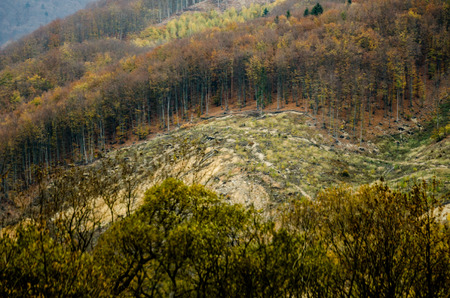 Autumn forest textures - deforestation in the mountains