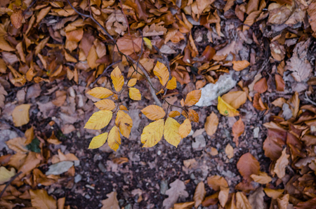 Colorful leaves on the ground near or after sunset