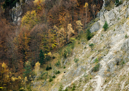 Autumn forest textures - deforestation in the mountains - landscape from Slovakia, Europe