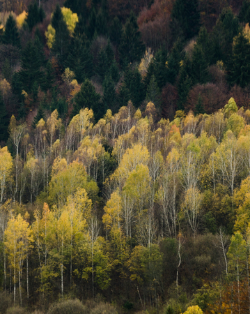 Autumn forest textures with colorful leaves and pine trees in the Slovakian mountains Europe