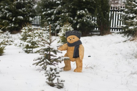 Teddy bear choose christmas tree from the garden covered by snow
