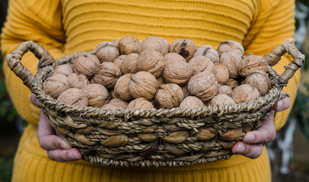 Girl holding in her hand a corf of walnuts in yellow knitted sweater - autumn lifestyle picture