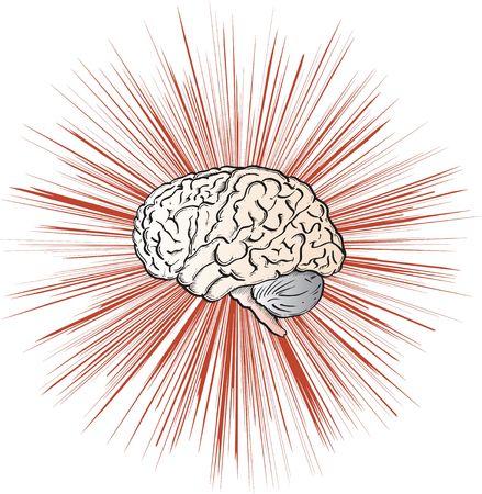 natural sciences: Brain Stock Photo