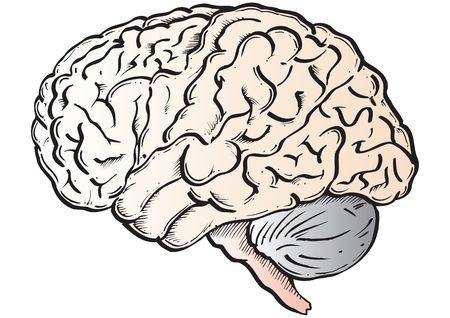 disciplines: Hersenen Stockfoto