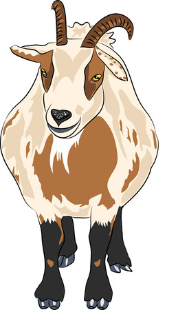 hilarious funny cartoon spotted goat with horns Isolated on white  Vector