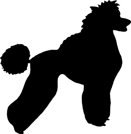 Poodle Head Silhouette Silhouette dog poodle breed isolated on white background stock photo -