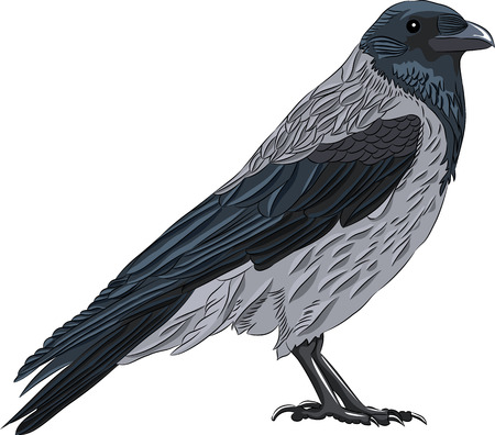 vector crow isolated on white background