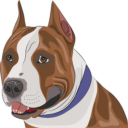 american staffordshire terrier close up Иллюстрация