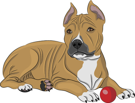 Puppy american staffordshire terrier with a red ball
