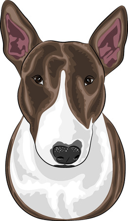 triangular eyes: vector dog breed bull terrier isolated on a white background