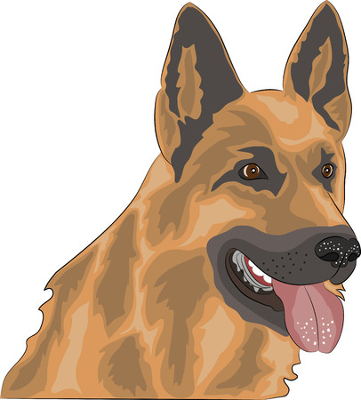 sheepdog: dog breed German Shepherd