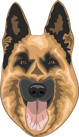 sheepdog: dog breed German Shepherd