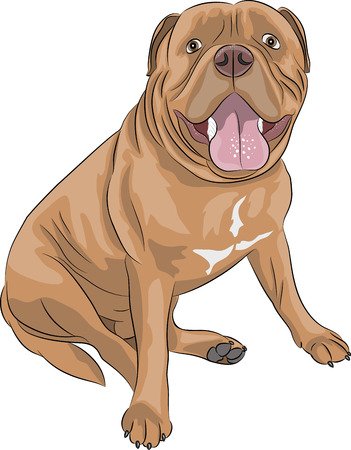 Dogue de Bordeaux in a sitting position isolated on white background